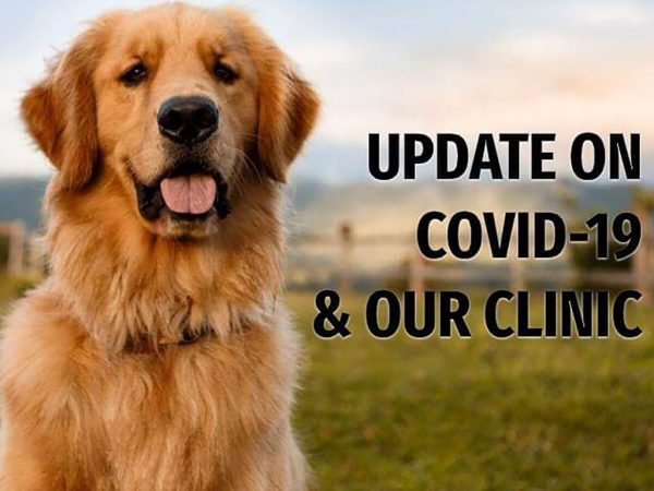 COVID-19 Clinic Update June 2021 1